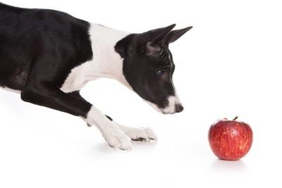 ːりんごのにおいをかぐ犬