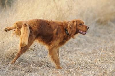 マーキングする犬