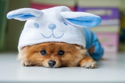 被り物をした犬