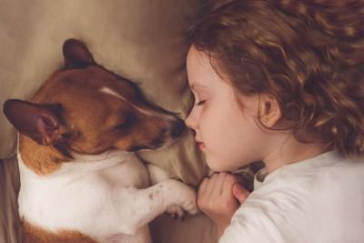 子供と寝る犬
