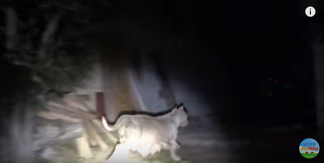 小走りで逃げる犬