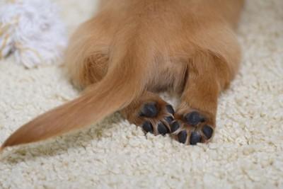 茶色い犬の両後足の肉球