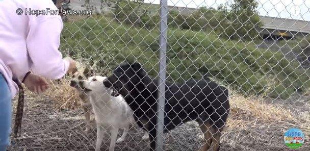 フェンス越しに集まる犬