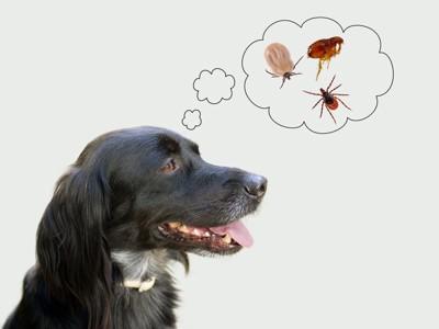 ノミダニを想像する犬