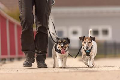 一緒に散歩する2匹の犬