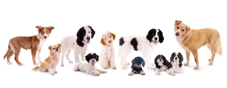 首をかしげる様々な種類の犬たち