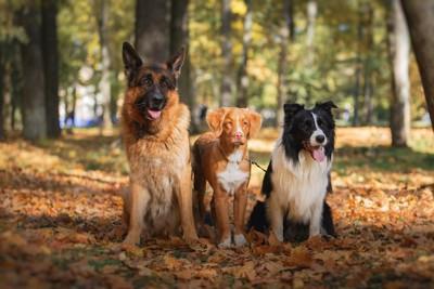 落ち葉の上で並んで座る三頭の犬