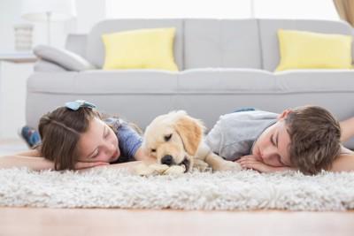 二人の子どもと寝転ぶゴールデン