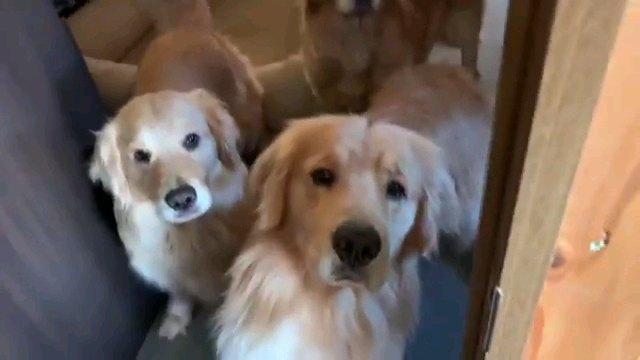 三匹の犬 泣きそうな一匹