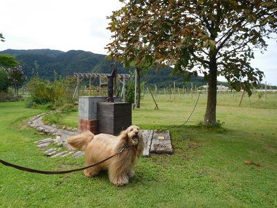 にこにこ笑顔の犬と山の風景写真