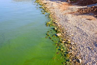 アオコに汚染された川