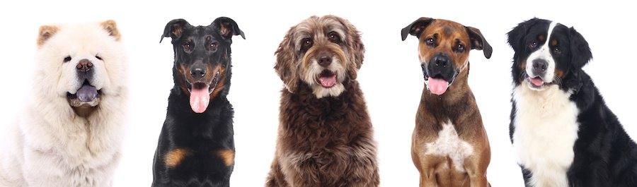 横に並んだ5匹の犬