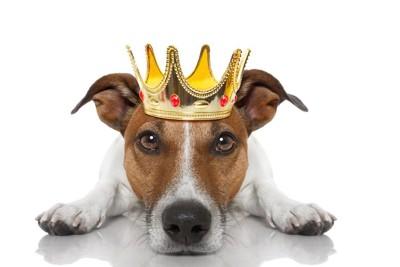 王冠を被って伏せている犬