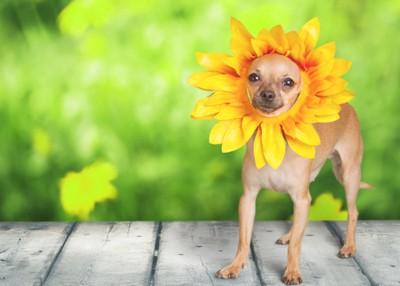 花になった犬