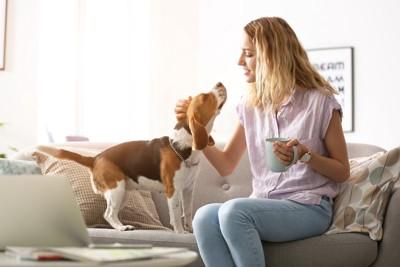 ソファーでコーヒーを持つ女性と撫でられる犬