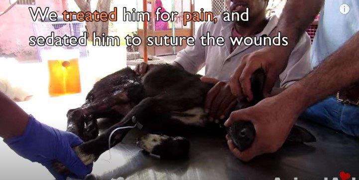 治療をうける犬