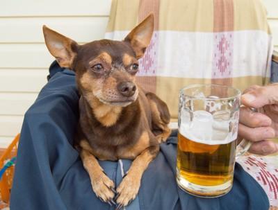 ビールを持つ飼い主とチワワ