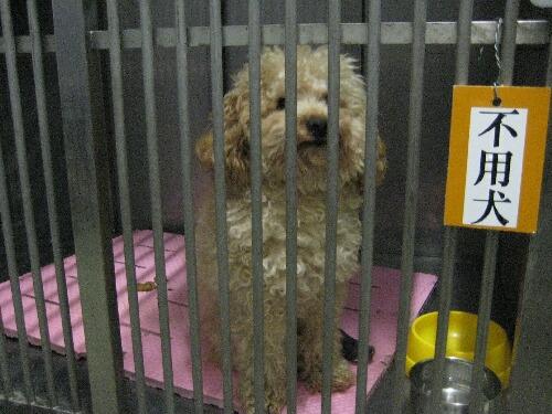 飼育放棄された犬は不用犬として殺処分待ち