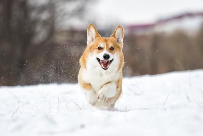 雪の上を走っている犬