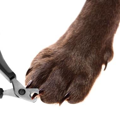 犬の爪切りアップ