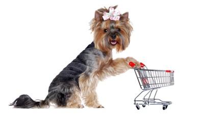 ショッピングカートとヨークシャーテリア