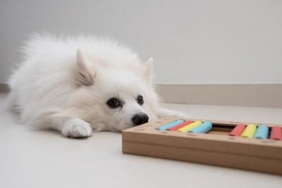 知育玩具と犬