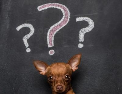 疑問符を浮かべる犬