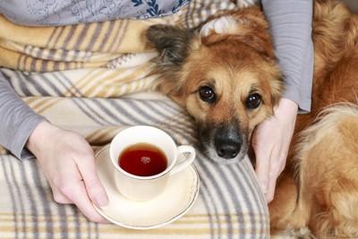 お茶を飲んでいる人と犬