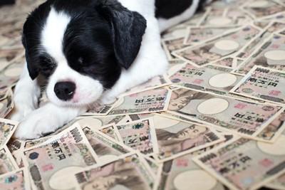 たくさんのお札の上に乗る子犬