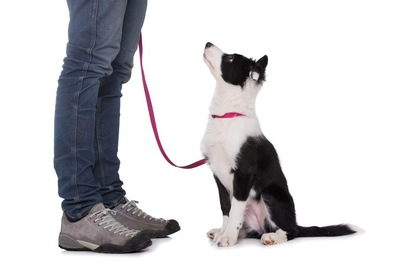 飼い主を見上げて座る犬