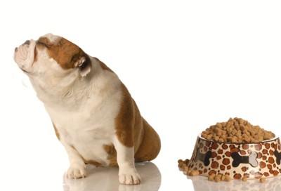 ご飯を嫌がる犬