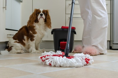 お掃除中の飼い主さんと犬