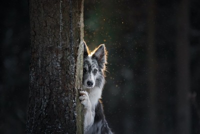 木の陰から見つめる犬