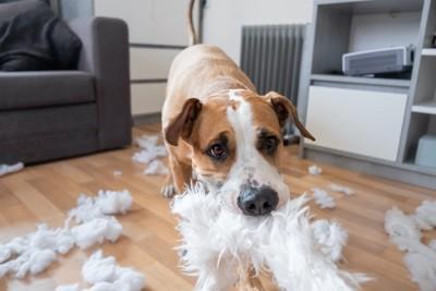 綿が散乱する部屋で遊ぶ犬