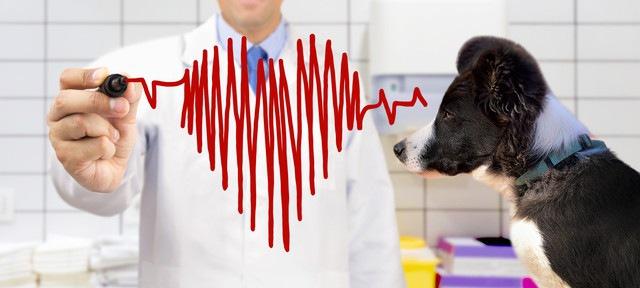 ハート形の心電図イラストと犬