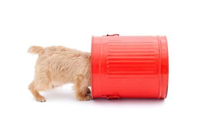 赤い缶の中を覗く犬
