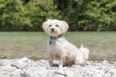 川辺で座っている犬