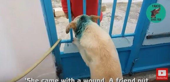 女性に尻尾を振る犬