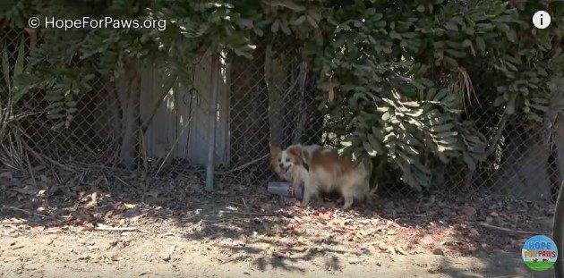 木陰に逃げ込む犬