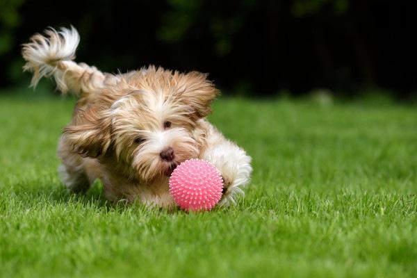 外で遊ぶ犬