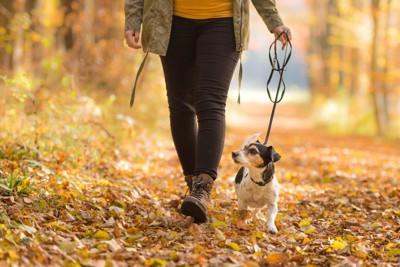 落ち葉の中を散歩する飼い主と犬