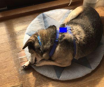 クッションの上で寝ている犬