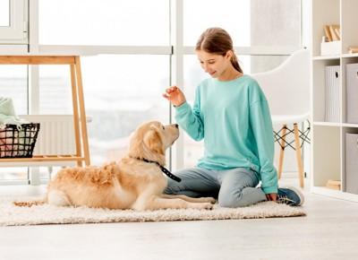 楽しくトレーニングをする犬と人