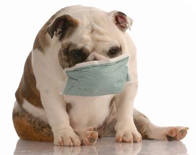 マスクをした犬