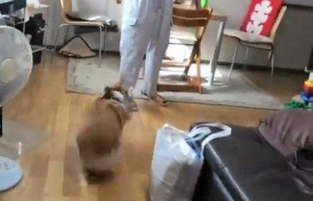 走るワンちゃん