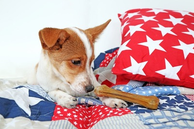 ベッドの上で骨を見つめる犬