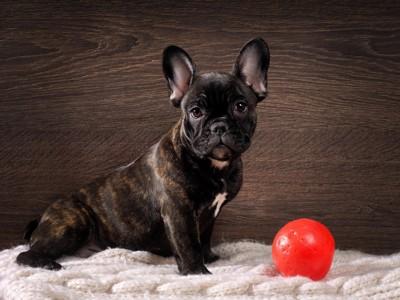 プラスチックのボールと犬