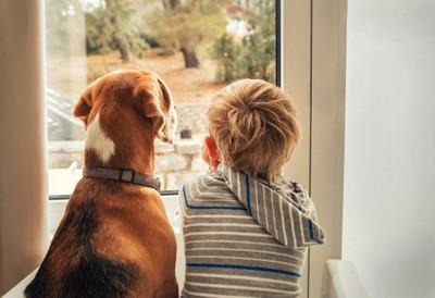 仲良く窓の外を眺める犬と子供