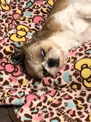 半目で寝ている犬