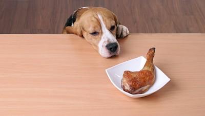 テーブルの上のチキンを狙っている犬